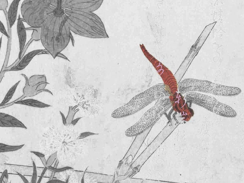 Tonbo-Aki Shimazaki