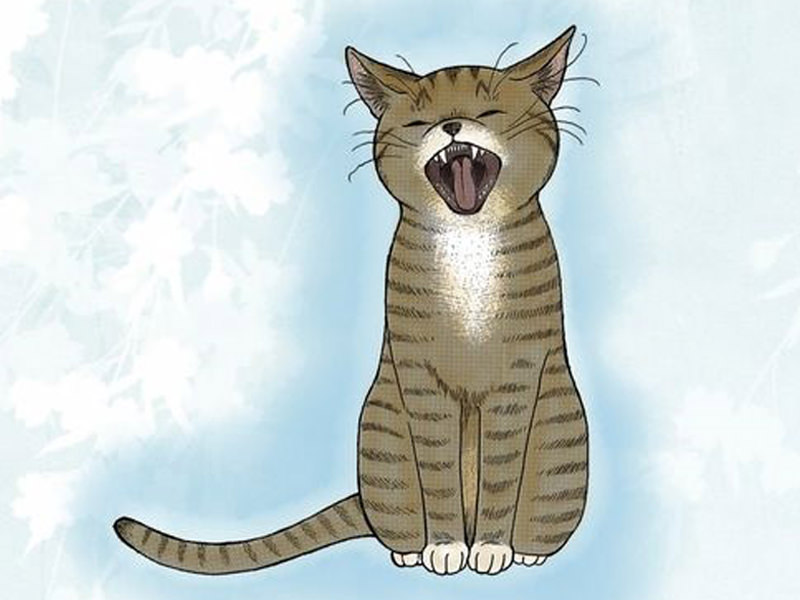 Soy un gato-Tirol Cobato-Quaterni